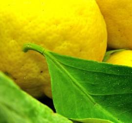 toque limón